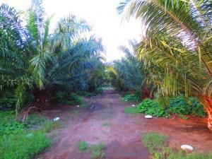 Plantation_HarvPath